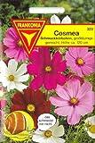 Cosmea, Schmuckkörbchen, Cosmos bipinnatus, ca. 100 Samen