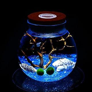 LED Aquarium Marimo Kit - Globe Glass Jar with 2 Aquatic Moss Ball Blue Glass Pebbles Fan Coral Branch and Seashells Office Desk Decor Table Centerpiece Unique Birthday Presents