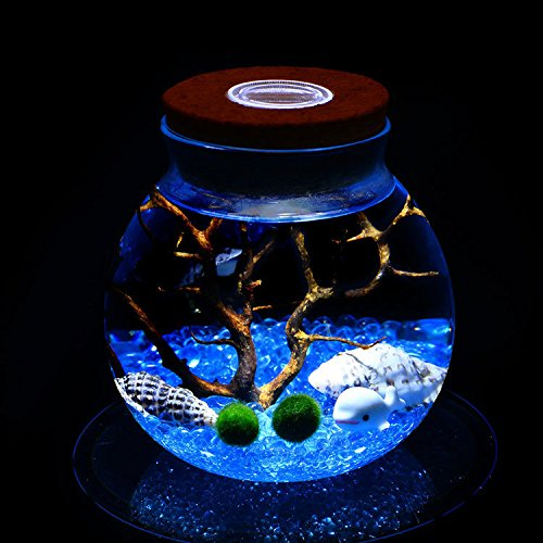 Newdreamworld blu Marimo acquario kit con vasetto di vetro Orb, Moss Ball, blu pietre di vetro, Sea fan, seashells-miniature subacquea Living per scrivania Decor, with a LED light