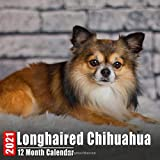 Mini Calendar 2021 Longhaired Chihuahua: Cute Longhaired Chihuahuas Photos Monthly Small Calendar With Inspirational Quotes each Month