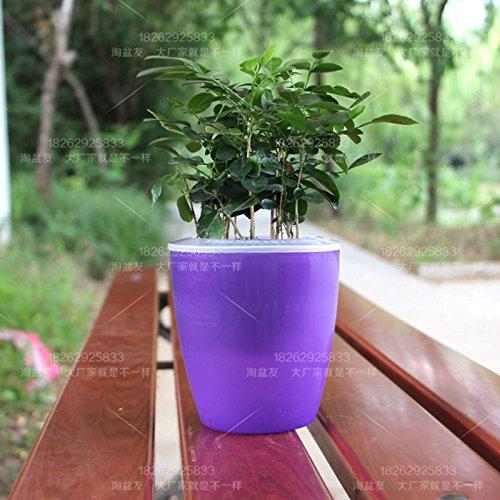 Zantec Coloré Auto Arrosage Ronde Pot De Fleurs Pot De Fleurs Maison Jardin Décor Végétal Vert Vase