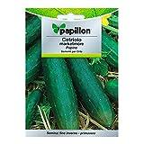Semillas Pepino Marketmore (5 Gramos)