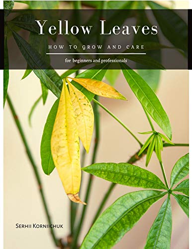 Yellow Leaves: How to grow and care