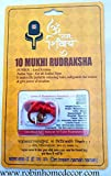 Robin Exports Premium Quality 10 Mukhi Rudraksha Ten Faced Rudraksh Bead Original & Certified for Men and Women