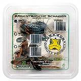 Dragon Argentinische Schaben mittel 15 STK in Dose - Futtertiere - Reptilienfutter - Futterinsekt