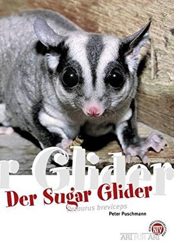Der Sugar Glider: Petaurus breviceps: Art für Art (Art für Art: Kleinsäuger)