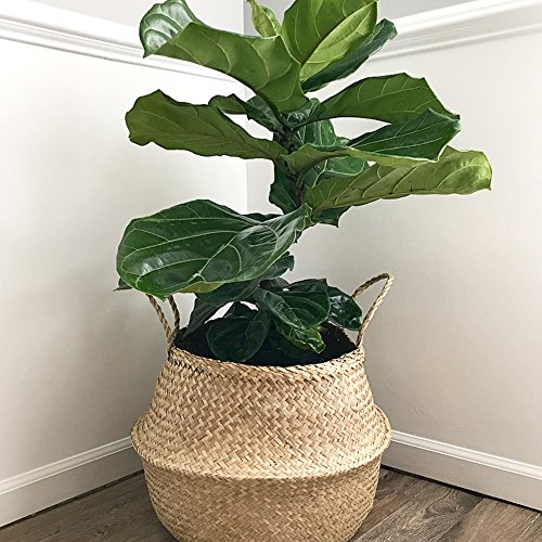Natural Craft Large Seagrass Belly Basket for Storage, Laundry, Picnic and Woven Straw Beach Bag - Plant Pots Cover Indoor Decorative (Centre Diameter 35cm)