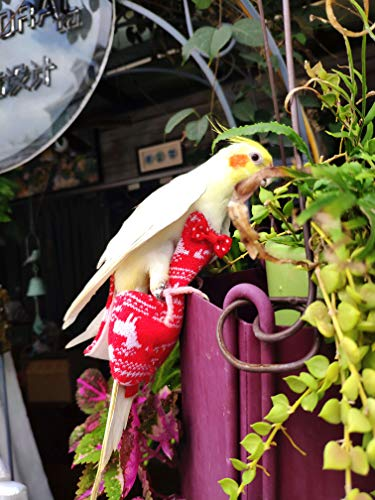 KUSO - Pañal para pájaros, ropa para pájaros, regalo de año nuevo, para amantes de los pájaros, reutilizables, lavables, periquito, cacatúa, guacamayo africano (Snowflake suéter, S)