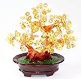 Feng Shui Gold Coins Money Fortune Tree Bonsai Home Decor Wealth Blessing Gift (Gold Coins TRE105)