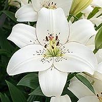絶妙な4種類の花(非植物種子)美しい庭の夏の花にぎやか屋外庭園暖かい家-3球根,2