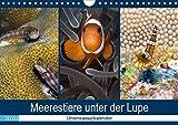 Meerestiere unter der Lupe - Unterwasserkalender (Wandkalender 2020 DIN A4 quer)