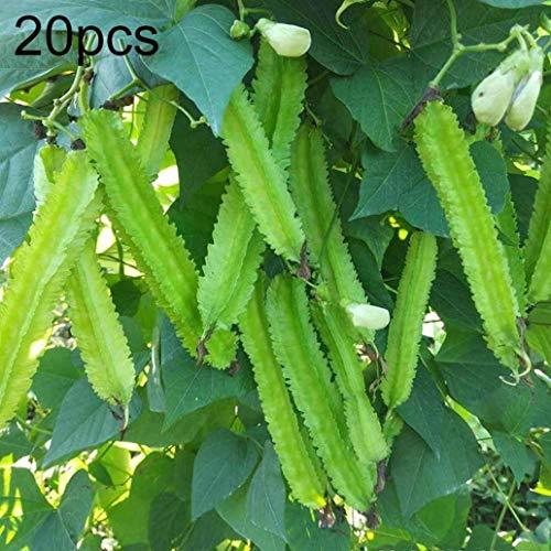 Uticon 20pcs Raras Semillas Aladas De Frijol Psophocarpus Tetragonolobus Huerto Decoraci¨®N - Semillas De Haba Con Alas