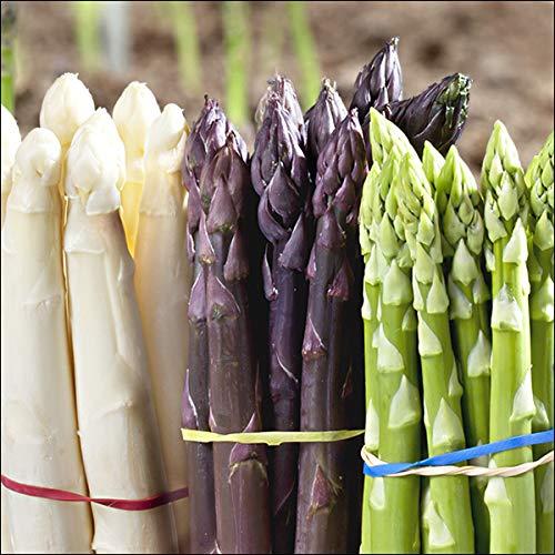 北海道産 極太 アスパラ 3色セット 900g (B/L-2Lサイズ) 旬 新鮮 野菜 アスパラ アスパラガス 北海道 お取り寄せ