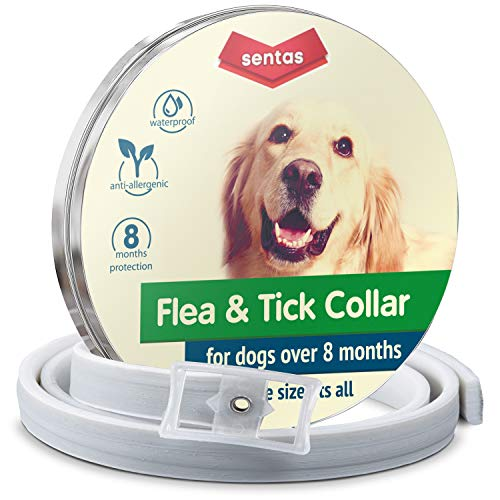 Flеа collar | Flеа and tiсk prеvеntiоn for dogs | Flеа collar for dogs | Dog flеа and...