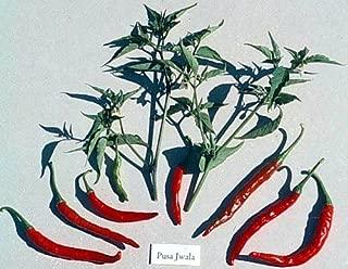 Pusa Jwala Finger Hot Indian Pepper 25 Seeds - Very Hot