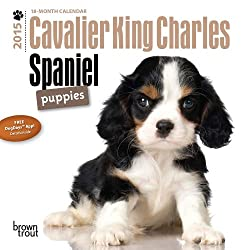 Cavalier King Charles Spaniel Puppies 18-Month 2015 Calendar[Browntrout Publishers]