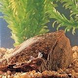 878195 - Dwarf African Frog - Dwarf African Frog...