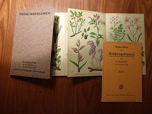 Frühlingsblumen . Bilderatlas mit erläuterndem Text: Leporello mit 173 farbigen Abbildungen auf 40 lithographischen Tafeln. Zum raschen Bestimmen nach Farben und Standorten geordnet.