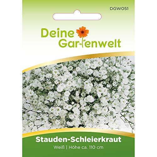 Stauden-Schleierkraut weiß | Schleierkrautsamen | Samen für Schleierkraut | Blumensamen winterhart mehrjährig