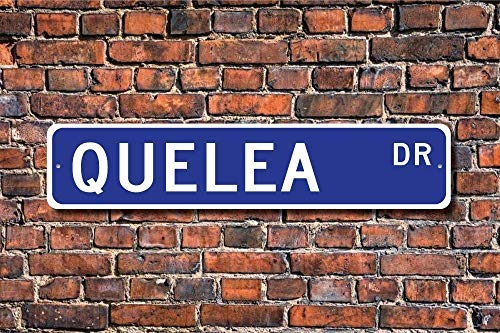 aqf527907 Lustige Metallschilder Quelea Geschenk Schild Dekor Quelea Liebhaber Vogel Native in Afrika Finken wie Garage Haus Hof Zaun Auffahrt Straße Dekor