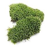 Xuping shop 2 unids Verde Artificial Falso Musgo Coral de Piedra Modelo Hierba Planta en Maceta Micro Paisaje Hadas jardín Acuario Adorno decoración