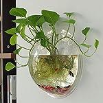 Candora Boule aquarium à accrocher au mur - Acrylique - Décoration #3
