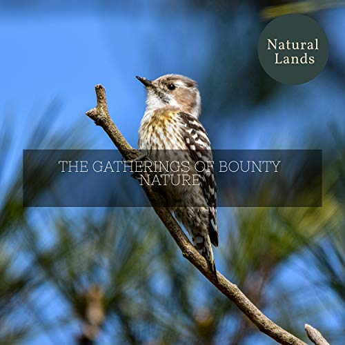 The Gatherings of Bounty Nature