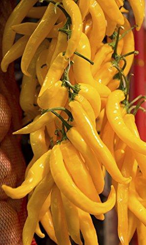 Seedeo Peperoni Sarit gat (capsicum annuum) 20 Samen