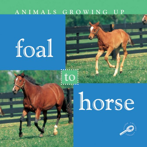 Foal to Horse audiobook cover art