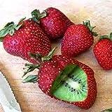 Sisaki Graines de Fruits Bio Rare Kiwi autofertile plante vivace graines plant riche, beau, Bonsai, graines de fruits de melon