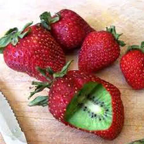 AIMADO Samenhaus-Rarität 20 Stück Erdbeere kiwi samen F1 Winterharte Kletterpflanze Bio Obst Saatgut,exotische samen für Garten, Balkon,Terrasse