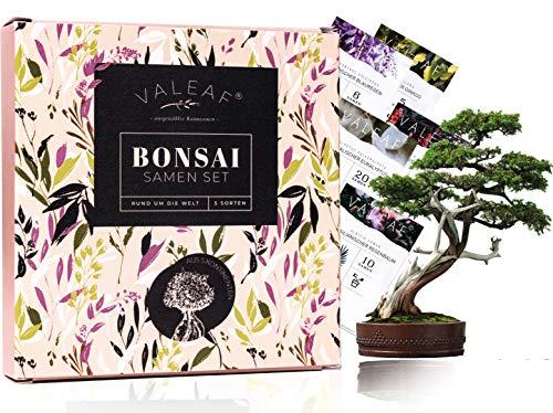 Bonsai Samen aus 5 Kontinenten I Exotische Baum Samen für deinen einzigartigen Bonsai Baum I Bonsai Starter Kit für Anfänger und Pflanzen Verrückte I Unser Bonsai Set als besondere Geschenkidee