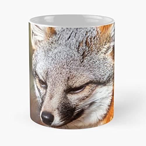 Fox Exotic Cute Channel Island - Taza de café de cerámica, diseño de Islas de animales rojos, color rojo
