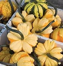 David's Garden Seeds Gourd Daisy Mix SL9487 (Multi) 25 Non-GMO, Open Pollinated Seeds