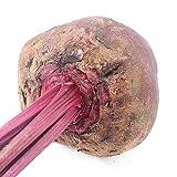 Semi di barbabietola rossa semi di barbabietola rossa fiore cuore striscia 300 capsule