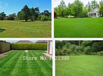 Les pièces de gazon Graines Golf Terrains de soccer Villa de grade spécial Evergreen Lawn haute qualité herbe graines