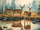 Diamond painting deer cross stitch kit 5D DIY crystal mosaic animal embroidery full set rhinestone picture embroidery A8 40x50cm