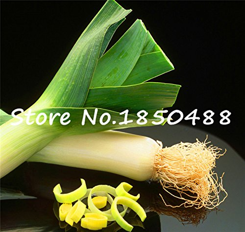 100 pièces / graines végétales sac de stérilisation, l'ail géant, graines de poireaux, la Chine oignon vert, l'oignon géant Graines, Jardin Bonsai plantes