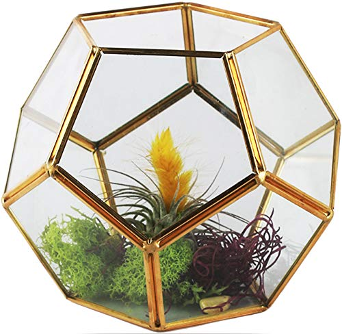 """Circleware 03506 Terraria Terrarium Clear Glass with Geometrical Metal Frame Design, Home Plant Decor Flower Balcony Display Box and Best Selling Garden Gifts 7.09"""" x 5.5"""" Gold"""