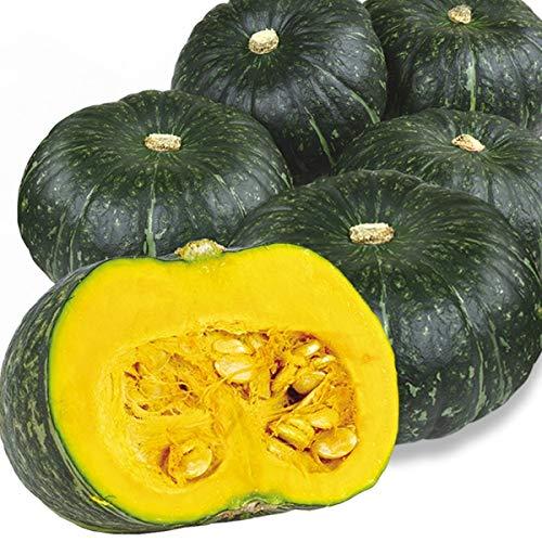 国華園 大特価 メキシコ産他 かぼちゃ 10�s 1組 野菜