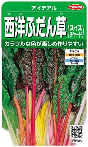 サカタのタネ 実咲野菜2883 西洋ふだん草(スイスチャード) アイデアル 00922883
