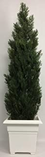 Outdoor Artificial UV Rated 5 ft Cedar Topiary Tree with Square Sandstone Planter