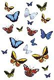 Kleine Wolke - Farfalle, Decorazioni artistiche statiche per docce e Vetro, Fissaggio e rimozione istantanei Senza Materiale Adesivo