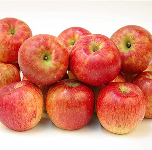 りんご 青森産 訳ありおまかせりんご 10kg 1箱 国華園