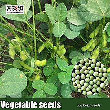 Potseed 20pcs Semillas de Frijol de Soja, Semillas de hortalizas Verdes semilla de Soja Edamame