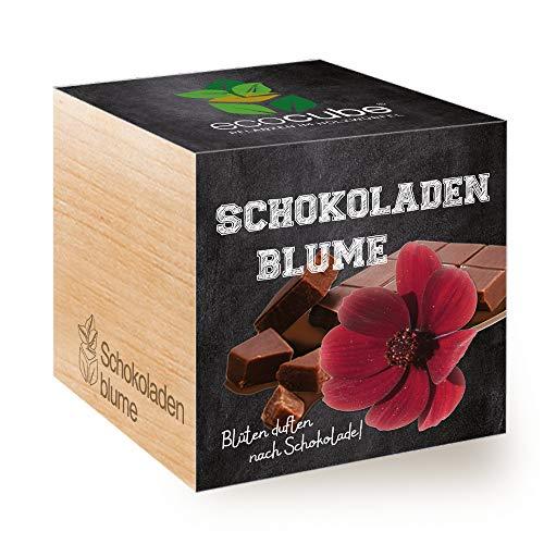 Feel Green Ecocube Schokoladenblume, Blüten Duften Nach Schokolade, Nachhaltige Geschenkidee (100{d17ee5fb75d5391018f0cefa53a458478bc6e45d874879bee9d11c5032a88650} Eco Friendly), Grow Your Own/Anzuchtset, Pflanzen Im Holzwürfel, Made in Austria