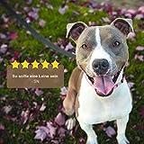 VITAZOO Premium Hundeleine in Graphitschwarz, massiv und verstellbar in 4 Längen (1,1 m – 2,1 m), für große und kräftige Hunde | 2 Jahre Zufriedenheitsgarantie | Hundeführleine, Doppelleine, geflochten - 5