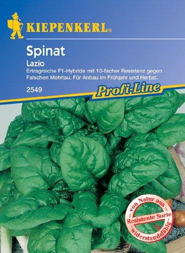 Spinat 'Lazio'
