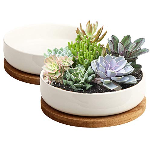 Succulent Pots, ZOUTOG 6 inch White Ceramic Flower Planter Pot with Bamboo Tray, Pack of 2 - Plants...