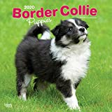 Border Collie Puppies - Border Collie Welpen 2020 - 16-Monatskalender mit freier DogDays-App: Original BrownTrout-Kalender [Mehrsprachig] [Kalender] (Wall-Kalender)